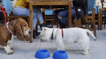 Lugares 'pet friendly' en Guayaquil